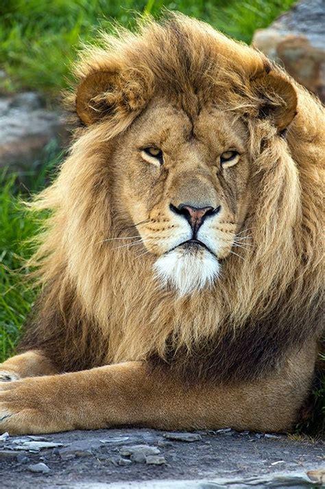 yorkshire wildlife park  animals beautiful