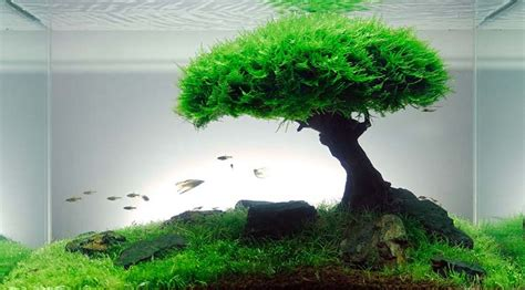 How To Design And Aquascape Your Aquarium  Leonardo's Reef