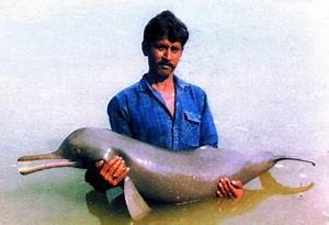 Save the Gangetic Dolphin for Healthy Ganges River | TechGape