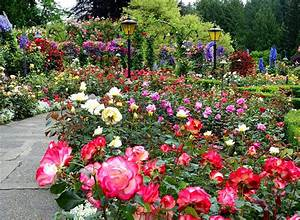 32 best images about Rose Garden on Pinterest | Canada ...