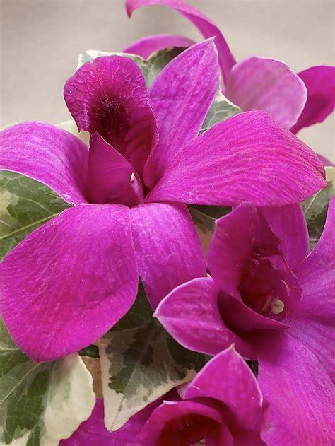 flower garden rich purple dendrobium orchid wrist