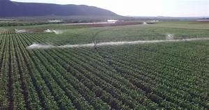 Aerial View Of Corn Fields Being Irrigated With Center ...
