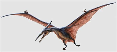 Pteranodon Pictures & Facts
