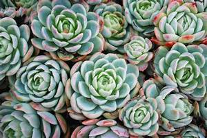 Fight, Off, Winter, Blues, With, Budget-friendly, Succulent, Plants