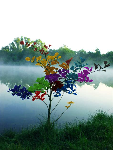 morning colors the beautiful rainbow colors photography 33 superb