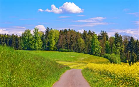 Green Background Nature  Hd Desktop Wallpapers  4k Hd