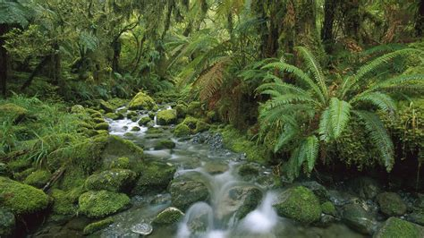 rainforest wallpapers   desktop backgrounds