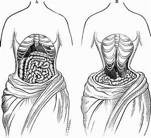 What Are The Disadvantages Of Waist Trainers