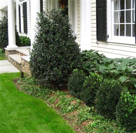 trees to plant to house foundation 141 best foundation planting images on pinterest dream homes foundation planting and