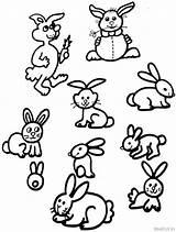 Coloring Bunny Rabbits Rabbit Widgets sketch template