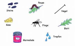 Was Essen Ameisen : was fressen unsere ameisen ~ Lizthompson.info Haus und Dekorationen
