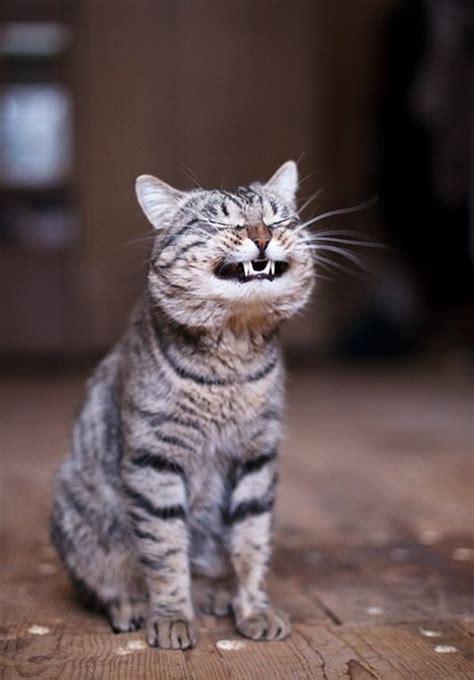 funny cats part   pics amazing creatures