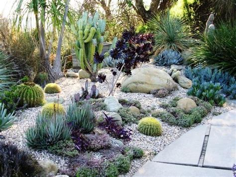 landscaping with cactus home and garden succulent garden
