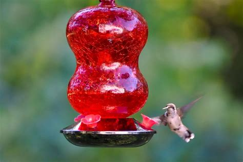 different types of hummingbird feeders
