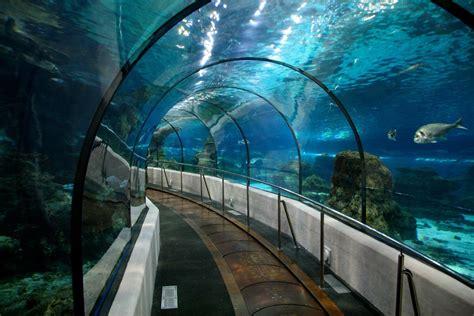 l aquarium sea aquarium barcelona bcn events crawls