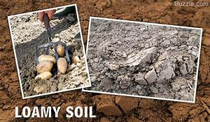 A List of Different Types of Soil You Haven't Seen Before