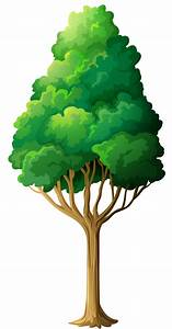 Tree Png - ClipArt Best
