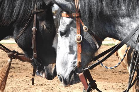 horses animals social sizzlfy