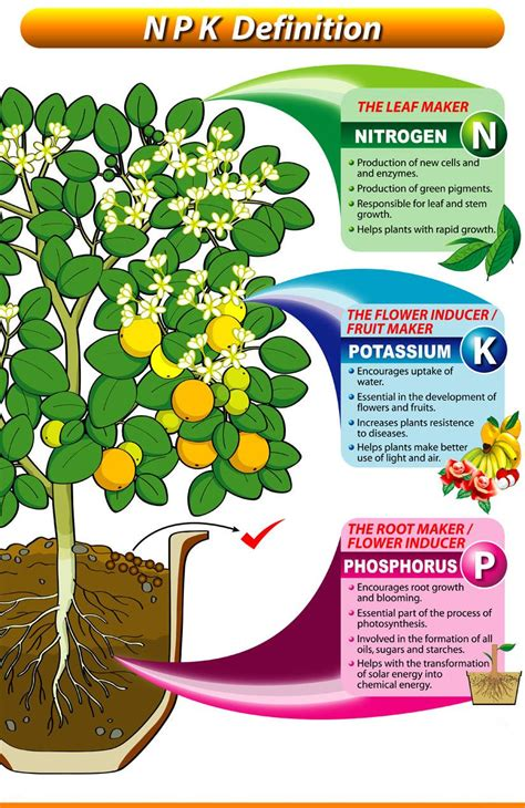 what does phosphorus do for plants what does npk in my fertilizer mean anyway definitions hydroponic gardening and gardens