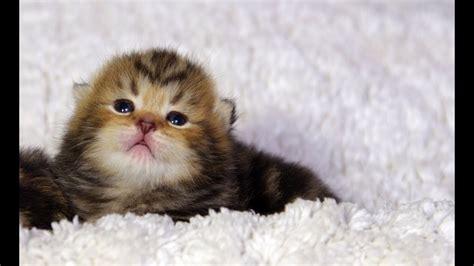 funny animals names cute yadbwcom