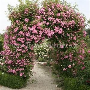Rosen Für Rosenbogen : hortus rosenbogen rosen online kaufen im rosenhof schultheis rosen online kaufen im ~ Orissabook.com Haus und Dekorationen