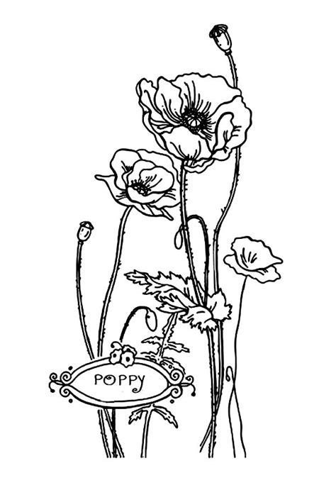 lovely california poppy  valentine day coloring page kids play color