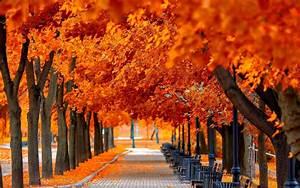 Autumn tree leaves beauty nature landscape wallpaper ...