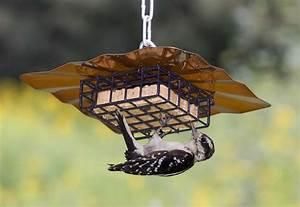 suet bird food Food