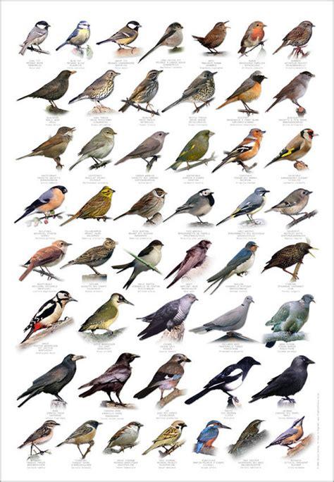 british birds identification chart wildlife poster new 163
