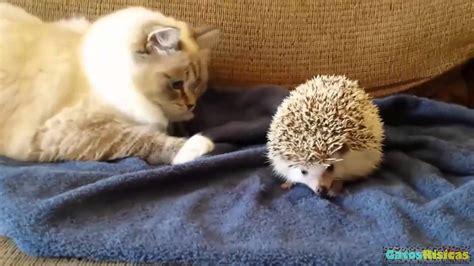 gatos conociendo animales  hd gatos jugando