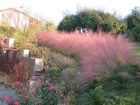 giardini e fiori progetto aiuole con graminacee e fiori stagionali verde idea