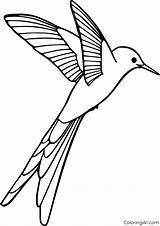 Coloring Hummingbird Bird Printable Cartoon Simple Birds Coloringall sketch template