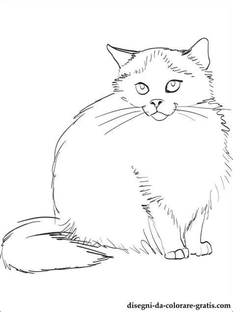 disegno  gatto himalayano da stampare disegni da