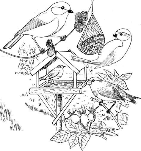 Kleurplaat Vogels In De Winter by Kleurplaat Vogels Voeren In De Winter 167 Besten Tiere Im