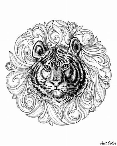 Tiger Coloring Tigers Leaves Adult Head Drawing