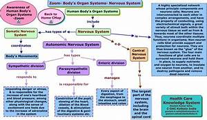 map the divisions of nervous system   Nervous System ...
