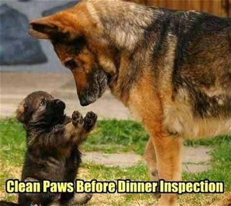 Clean Animal Memes - 27 funny animal memes that are sure to brighten your day