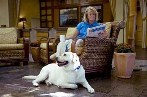 pet friendly hotel portola hotel spa at monterey bay in