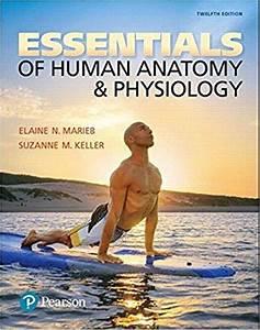 Essentials Of Human Anatomy  U0026 Physiology 12th
