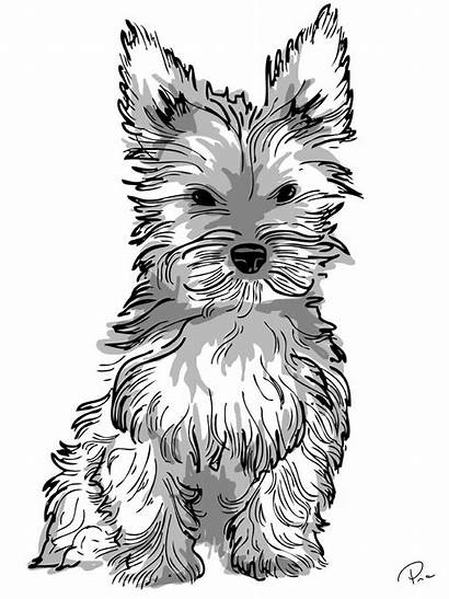 Yorkie Coloring Dog Adult Drawing Puppy Terrier
