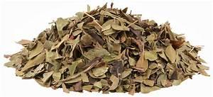 Bearberry Leaves Cut  4 Oz  Arctostaphylos Uva Ursi