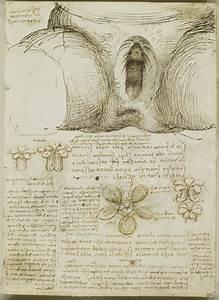 Body Maps  Leonardo Da Vinci U0026 39 S Anatomical Drawings