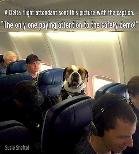 cani in aereo in cabina cani al sicuro in aereo mai pi 249 in stiva ma semmai in