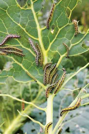 Managing Common Garden Pests What Works, What Doesn't