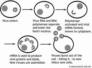 Viruses And Infection  Structure  Transmission  Avoiding