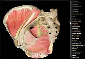 Amazing Interactive Diagram Of The Female Pelvis    This