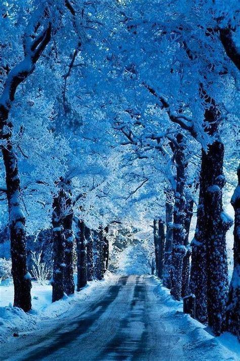 snowy alaskan cluster light tree зима красивые картинки на телефон 99 изображений