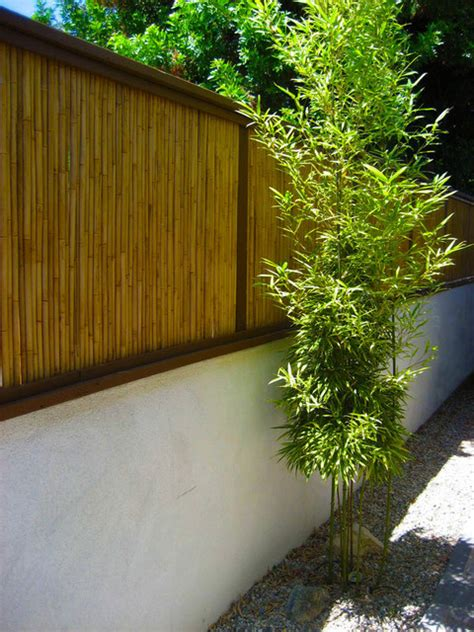 bamboo fence patio