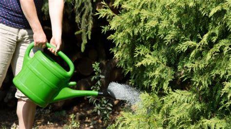 Der Garten Im August by Der Garten Im August Tipps Tricks Vom G 228 Rtner Diybook Ch