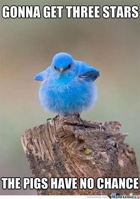 Funny Bird Memes - 30 most funniest bird meme images and photos